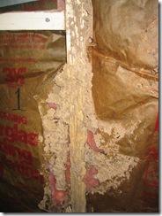 Subterrranean termite mud tubes inside wall