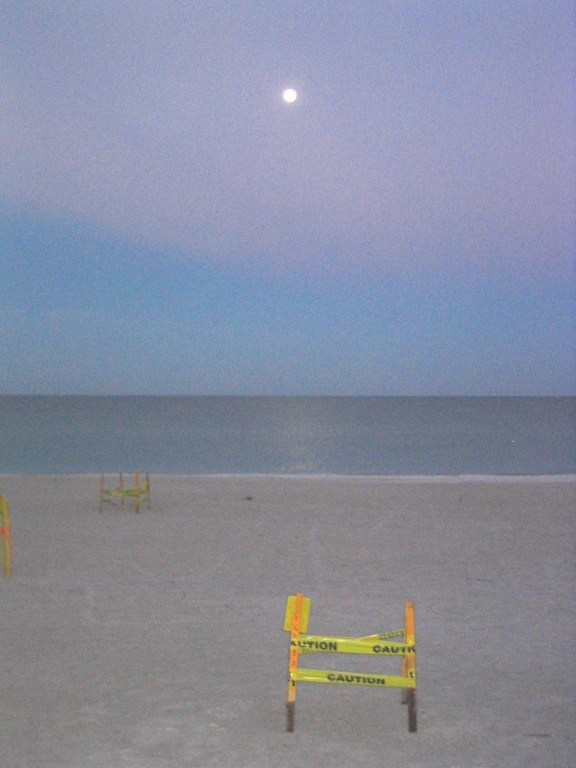 Sea turtle nests and moonlight
