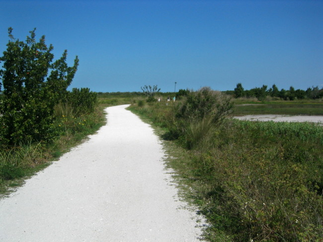 The beginning of the unpaved trail towards osprey nest poles and observation tower