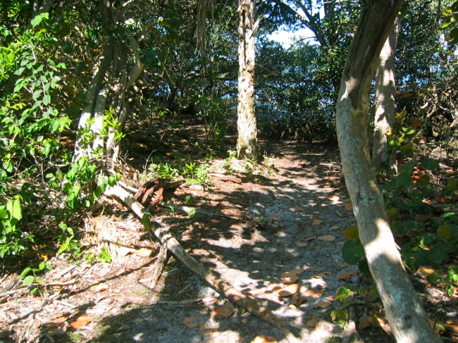 Robinson Preserve trails in native forest