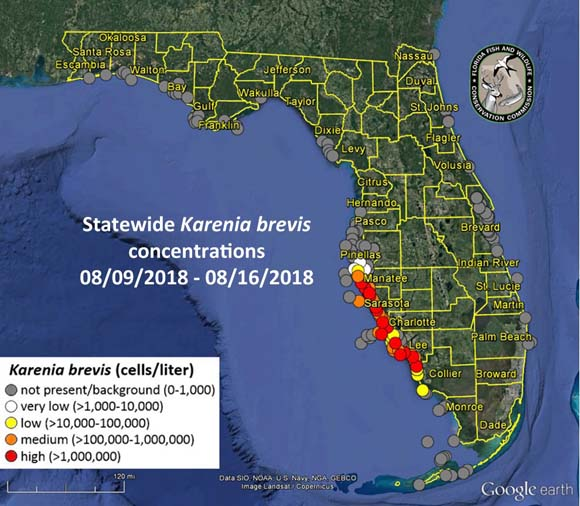 K. Brevis concentrations Florida Gulf Coast, from Florida Wildlife Conservation http://myfwc.com/research/redtide/statewide/