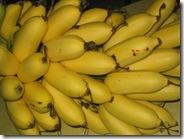 Anna Maria banana
