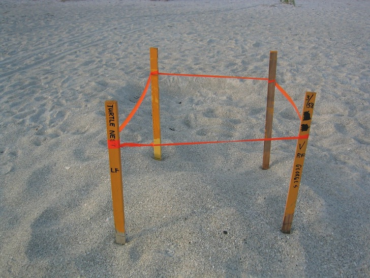Turtle nest staked out