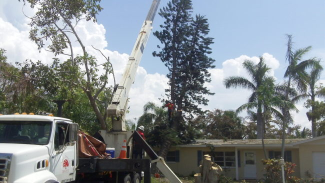 Removal of trees threatening a structure after Hurricane Irma passed
